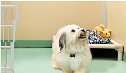 Dog Hostel Service