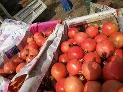 Pomegranates in Sangola, अनार, संगोला - Latest