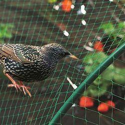 Bird Protection Net