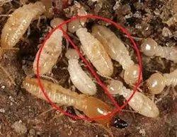 Termite treatment, in Delhi, Anywhere in India