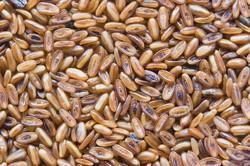 Plantain Seed, Packaging Type: Packet, Packaging Size: 50 Gm - 1 Kg