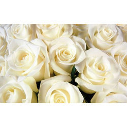 Paper With Plastic Coated Modern 3D White Rose Wallpaper