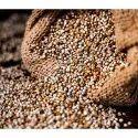 Natural Pearl Millet