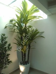 Green Decorative Artificial Plant, For Home, Size: 9feet