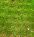 Pe Greenwall - Brown Mix Green Moss Bm - 90, Size: 1 * 1 Mtr