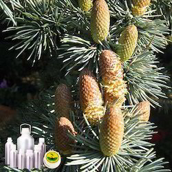 Cedarwood Atlas Oil Certified Organic
