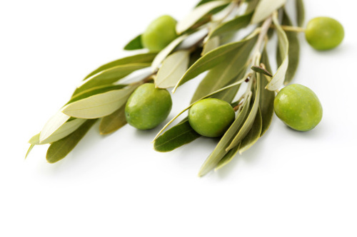 does olive leaf extract cause acid reflux
