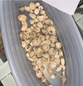 Fritillaria Roylei (Ashtha Varga Main Product )
