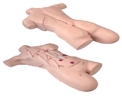 Surgical Suturing and Bandaging Simulator Model