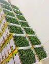 A Grade Green Chilli, Maharashtra, Packaging Size: 5 Kg