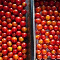 Tomato Cold Storage Rental Services