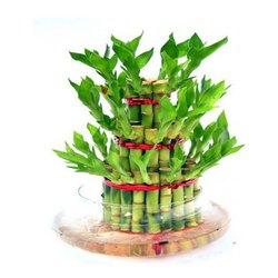 Green 3 Layer Bamboo Plant