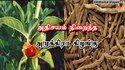 Ashwagandha Roots  Dried