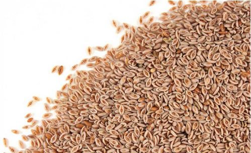 Psyllium Seed And Seed Powder Indyagro Foods Private Limited