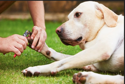 Dog Clinic Services