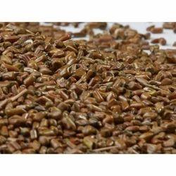 Cassia Tora Seeds, Packaging: 25 - 50 kg
