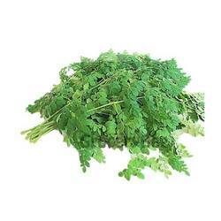 Pure And Natural Moringa Leaves