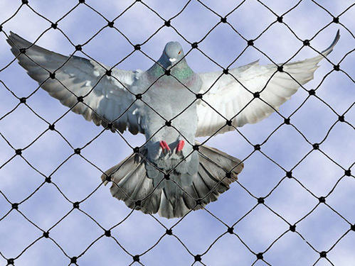 Service Provider of Anti Bird Nets & Bird Spike by Ramana