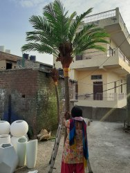Artificial Coconut Tree 10 Feet