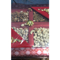 Colored Dry Fruits Box