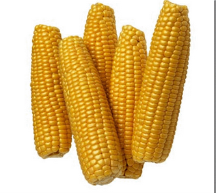 maize starch manufacturers in india