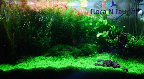 Flora N Fauna Misc Aquascaping Professional, Size: 30 X 30 ...