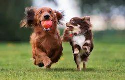 Pet Care Service, For Clinic Purpose