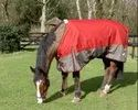 Waterproof Turnout Rug