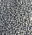 Natural Black Desi White Shatavari Seeds, Packaging Type: Bag, Packaging Size: 25 Kg