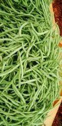 Green Karnataka Vegetables, Gunny Bag