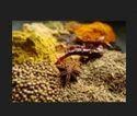 Curry Powder Paste