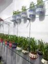 Garden Bamboo Plant