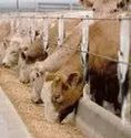 Animal Feed Testing Service