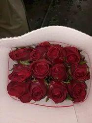 Pure Red Rose, Packaging Type: Bundle