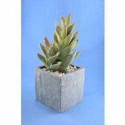 Greenpots Artificial Cactus