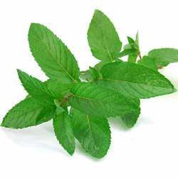 Dehydrated Mint Leaf