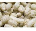 Pseudomonas Putida Probiotic