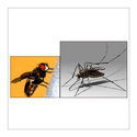 Flying Insects Pest Treatment Service