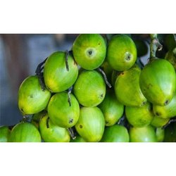 Betel Nuts in Kolkata, West Bengal | Get Latest Price from