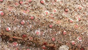 Full Sequin Embroidery Fabric