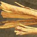 Cinnamon Bark Oils