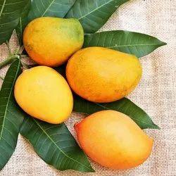 A Grade Mango, Packaging Type: Carton, Packaging Size: 10 Kg