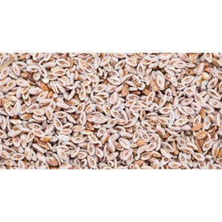 Spogel Seed Wholesale Price For Spogel Beej In India