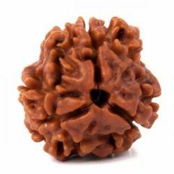 Round Brown 3 Mukhi Rudraksha, Size: 19mm