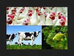 Animal Health