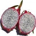 Pitaya Fruit Plant