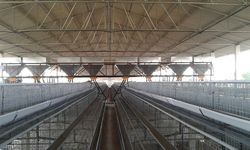 Automatic Poultry Feeding System