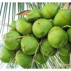 Natural Green Coconut