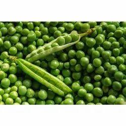 A Grade Fresh Green Pea, Gunny Bag, 10 Kg