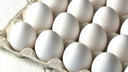 Egg in Surat, अंडा, सूरत - Latest Price & Mandi Rates from
